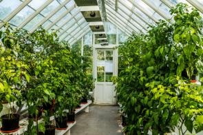 Estufa de plantas