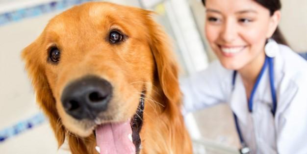 Cão no veterinário