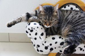 Gato a dormir